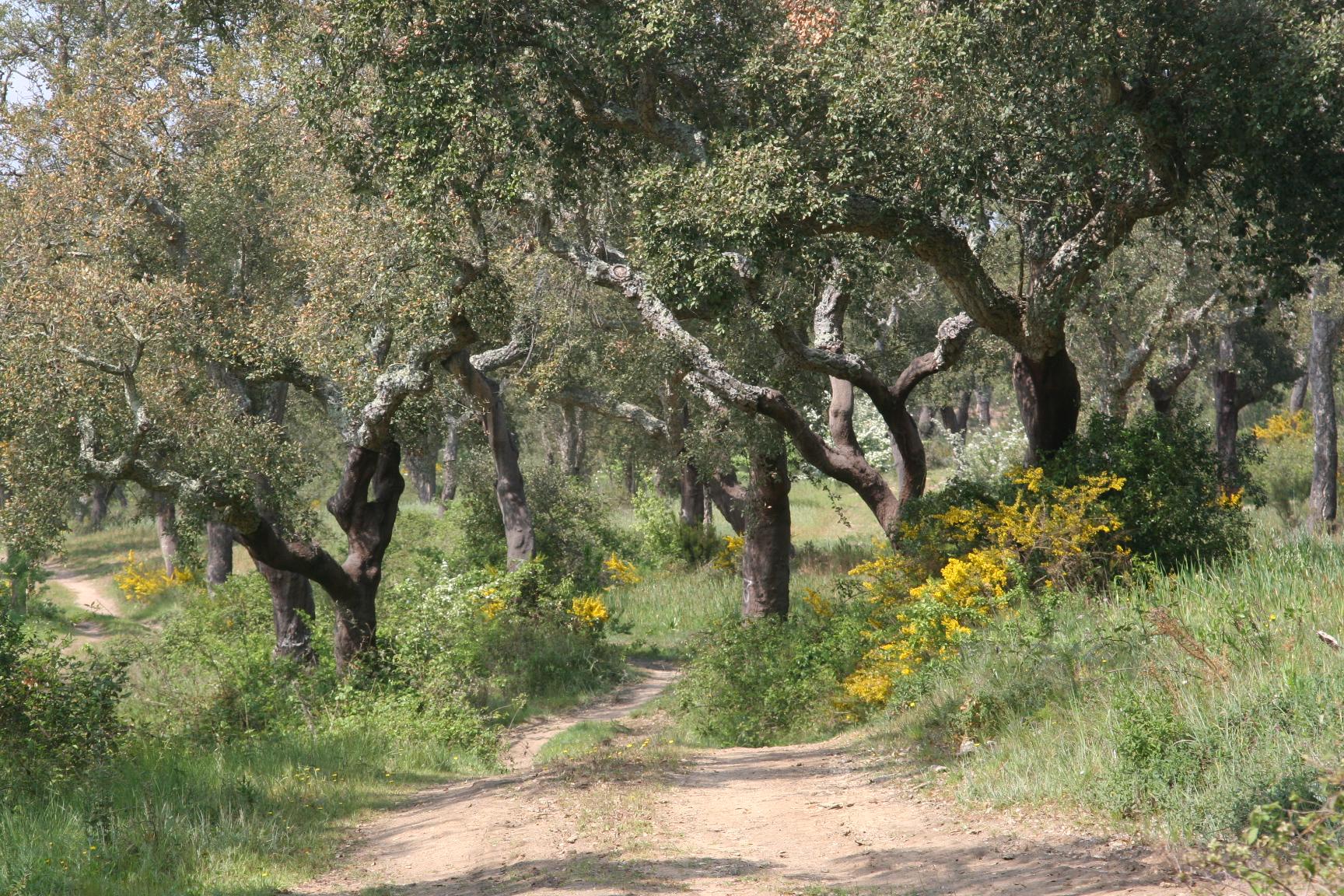 Quintadoarchino_thefarm1