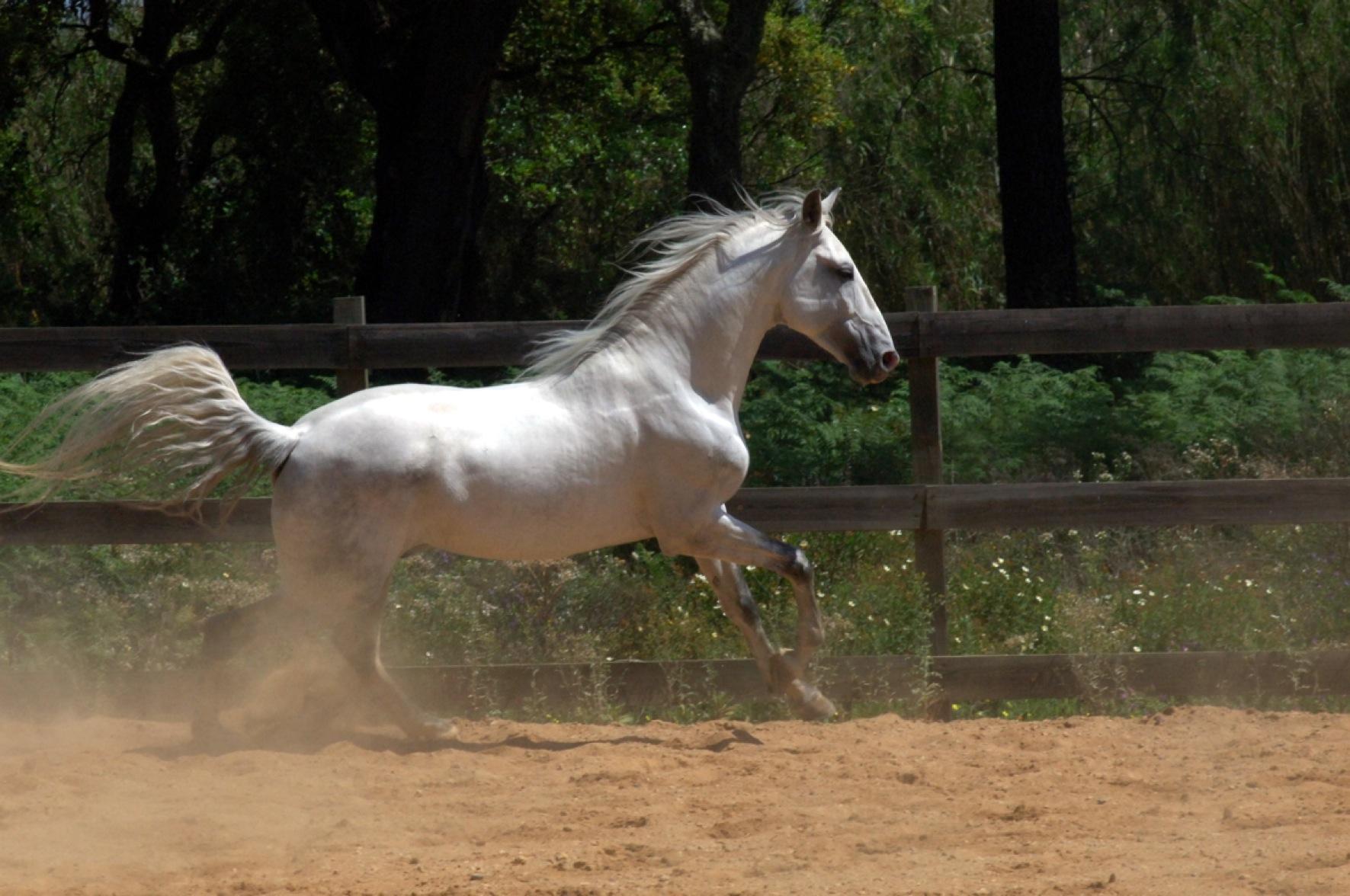 Zeus running free