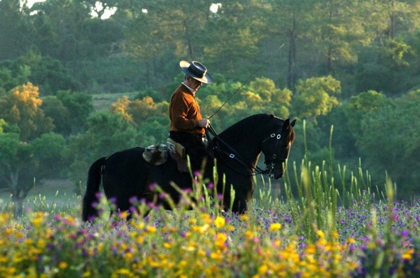 classical riding holidays portugal