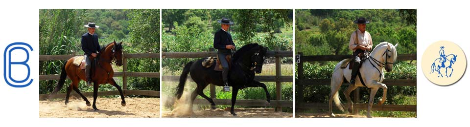Classical Dressage School Portugal