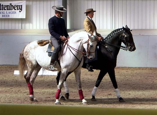 francisco de Braganca classical dressage holidays lusitano horse
