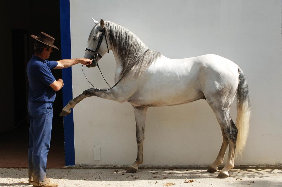 Quintadoarchino_28