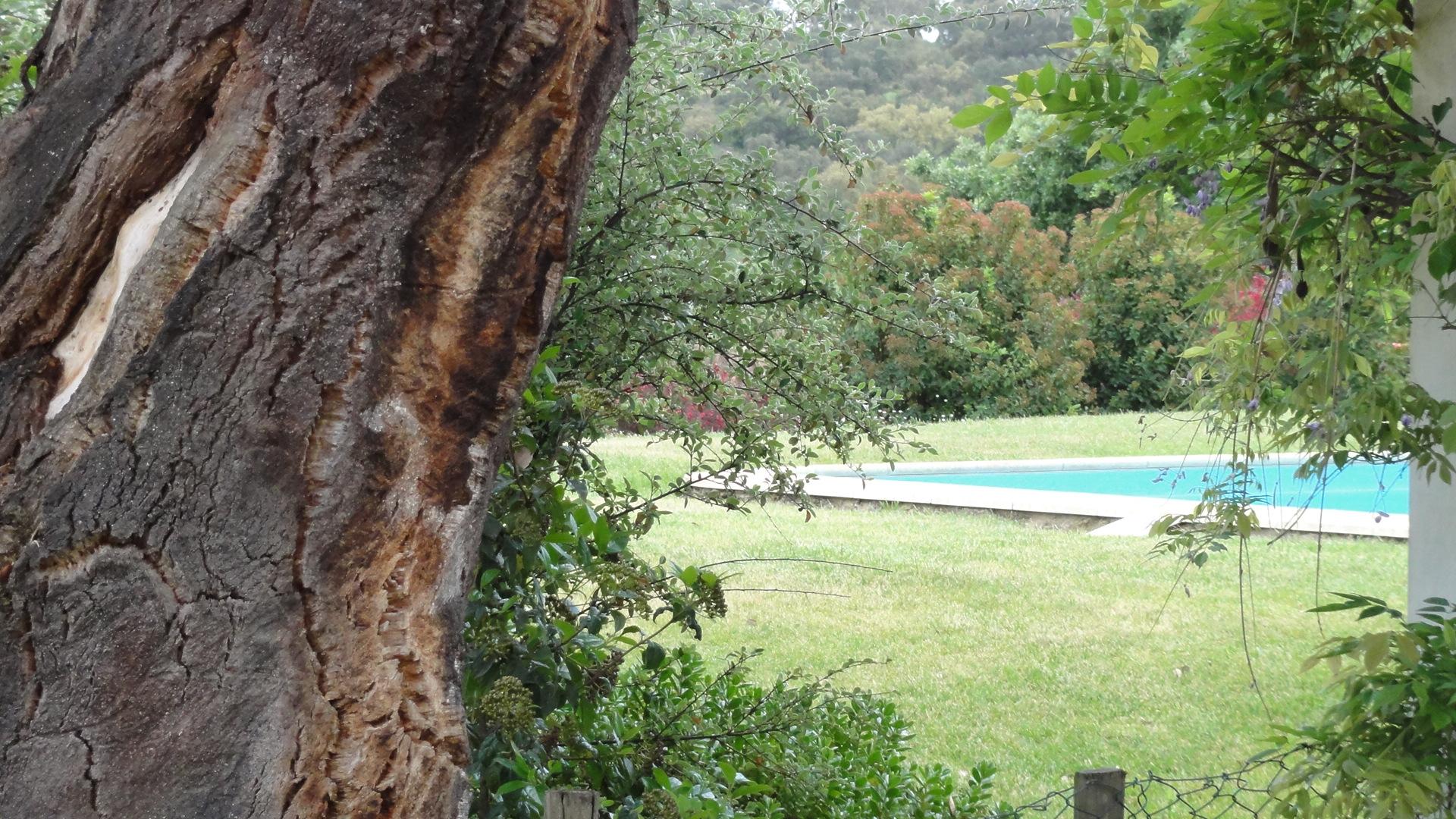 Quintadoarchino_thefarm18