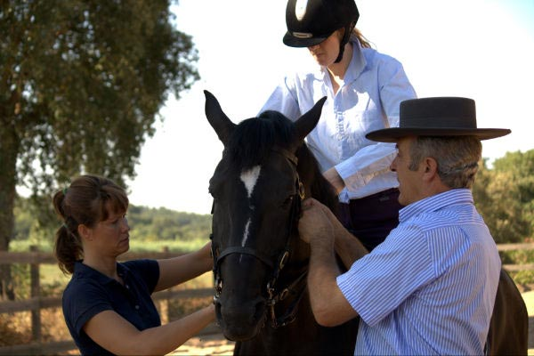 Horse Training and Livery
